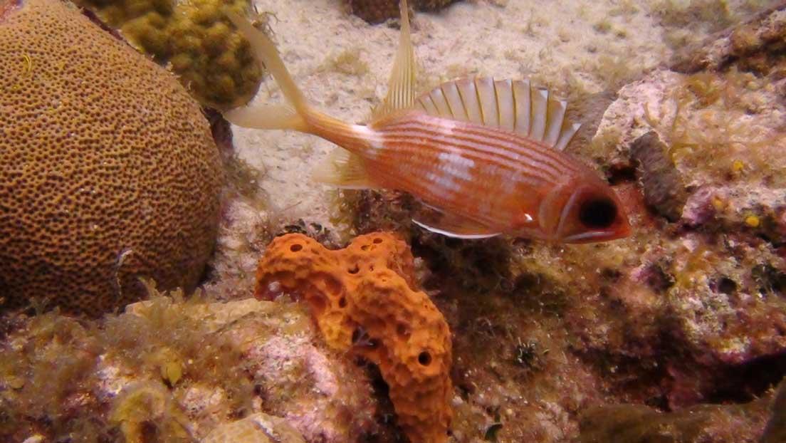 Grand cayman island 2012 for Big eye squirrel fish