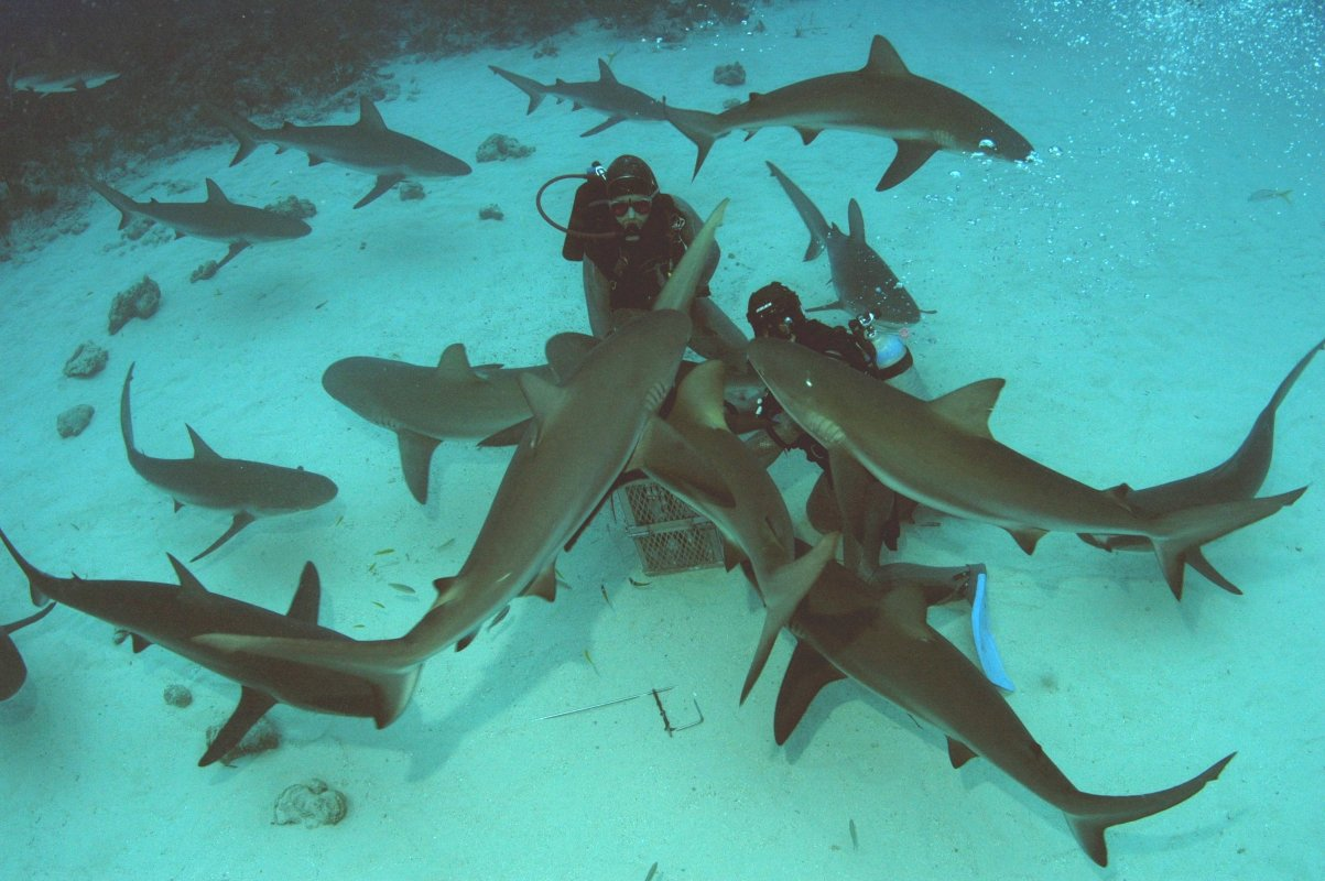 Displaying 18> Images For - Real Pictures Of Sharks Eating People...